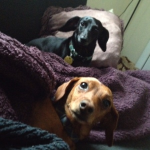 Brittany's doggies
